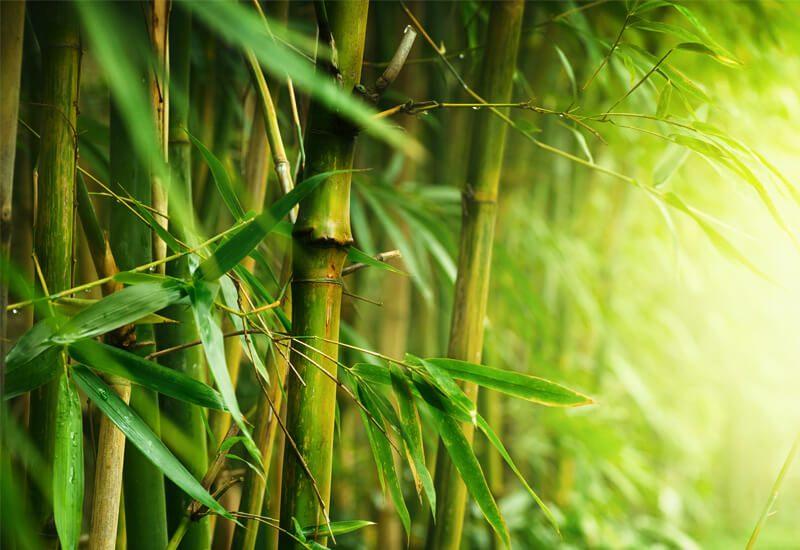 Idealna kombinacija bambusa i mikrovlakana za udobnost i toplinu u zimskim mjesecima