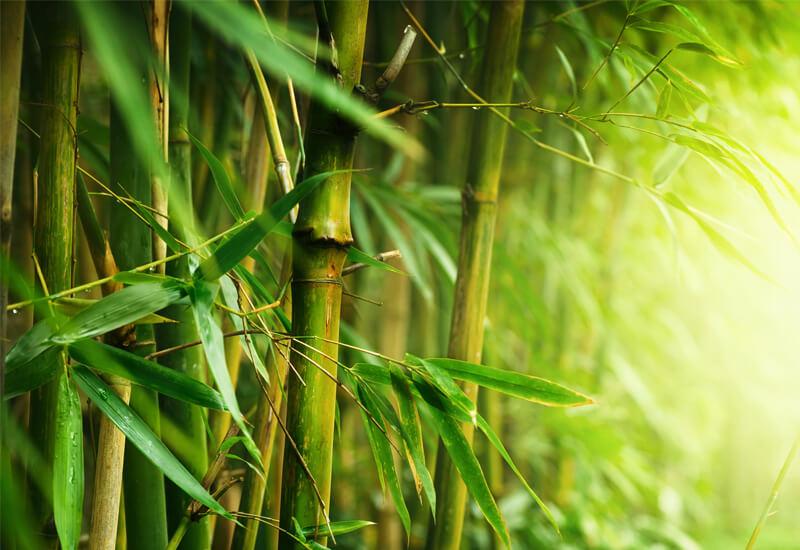 Savršena kombinacija bambusa i mikrovlakana za udobnost i toplinu tijekom cijele godine