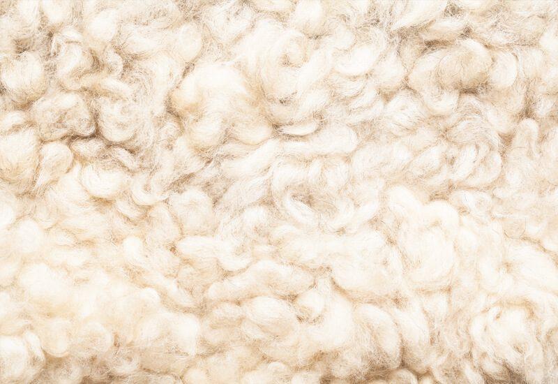 Ovčja vuna kao najbolji prirodni termoregulator.